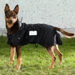 Hunde-Netzmantel