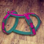 Dogfellow Brustgeschirr-Easy Cayaneblue-Pink Sonderedition Gr. S/M